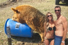 DJ and Paulina Gretzky and a giant pig humping a barrel